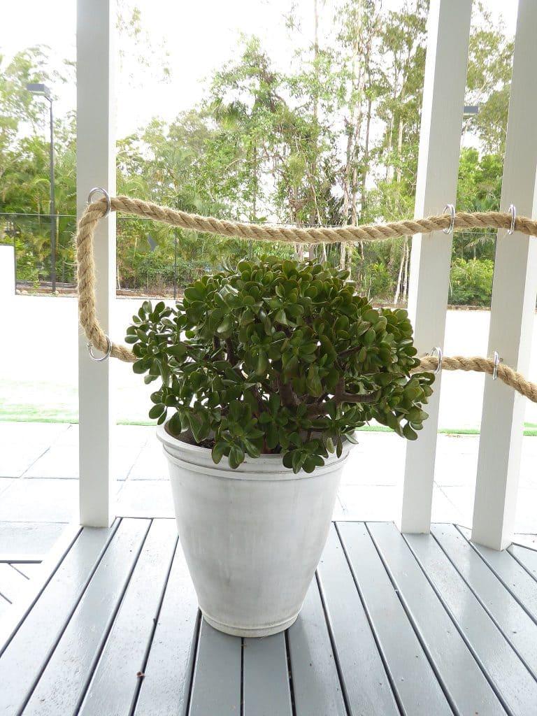 gazebo plant detail